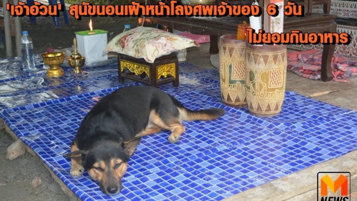 สะเทือนใจ! สุนัขแสนรู้ นอนเฝ้าหน้าโลงศพเจ้านาย 6 วัน ไม่ยอมกินอาหาร