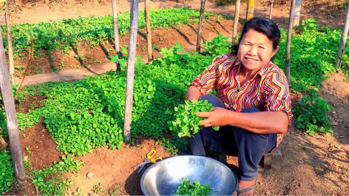 วิธีปลูกผักโขม / How to grow spinach / 如何种植菠菜