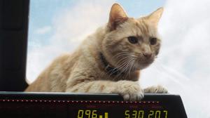 คนเกาหลีตัดต่อเอารูปแมวสุดน่ารัก ใส่แทนที่ กูส ในโปสเตอร์ตัวละครหนัง Captain Marvel