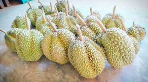 What Should You Do When You CAN'T STAND Durians, but also CAN'T SKIP it?