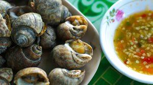 แบบไหนเรียกว่าหอยหวานล่ะ? วิธีดูหอยหวานที่สายซีฟู้ดต้องรู้ไว้