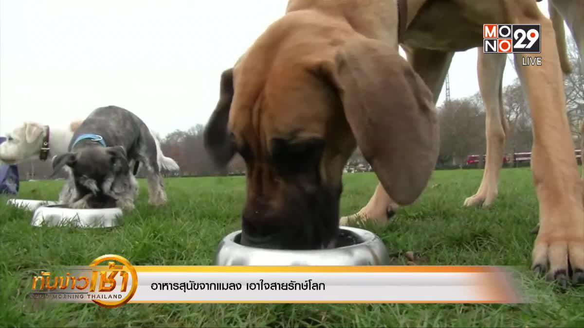 อาหารสุนัขจากแมลง เอาใจสายรักษ์โลก