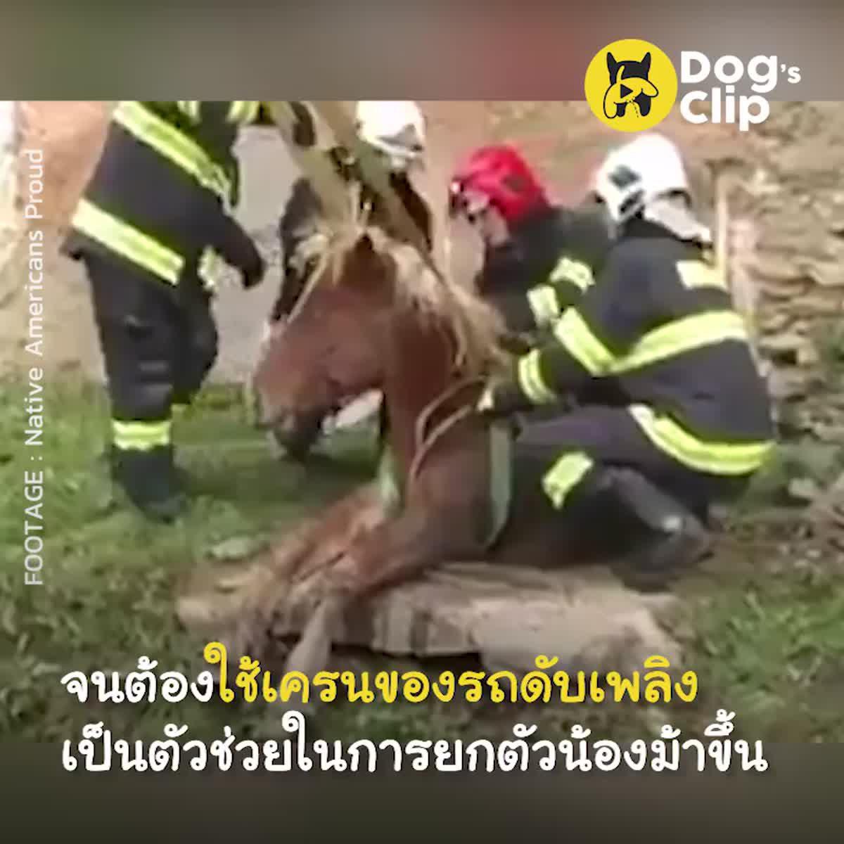 ทีมดับเพลิงเร่งช่วยเหลือม้าพลัดตกท่อระบายน้ำเสีย