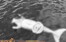 พบซากพะยูนใกล้เกาะไหง ทะเลกระบี่