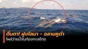 ตื่นตา! ฝูงโลมา – ฉลามหูดำ โผล่ว่ายน้ำในท้องทะเลไทย