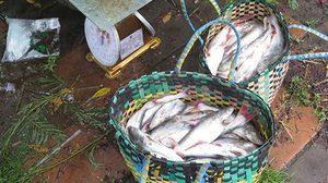 ชาวประมง จ.นครพนม อาศัยช่วงระดับน้ำโขงสูง จับปลาขายฟันรายได้อื้อ