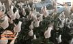 ชาวบวกเต๋ยเร่งตัดดอกกุหลาบส่งขายวาเลนไทน์