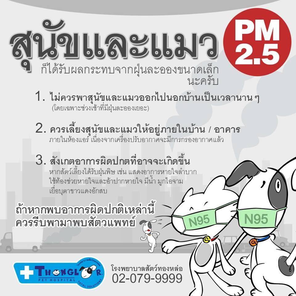 สุนัข และแมว ก็ได้รับผลกระทบจากฝุ่นละอองขนาดเล็ก (PM 2.5)