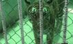 ตรวจสอบเสือ 4 ตัว โยงวัดป่าหลวงตาบัว