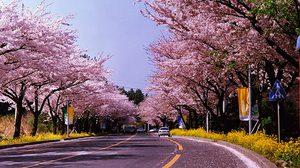 เทศกาลสำคัญประจำฤดูกาลต่างๆ ของเกาะเจจู