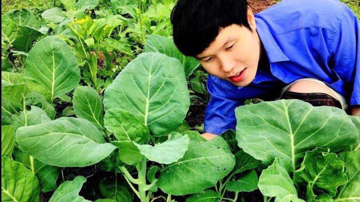 วิธีปลูกผักคะน้า และ ผักกวางตุ้ง / How to grow Chinese kale and Chinese flowering cabbage