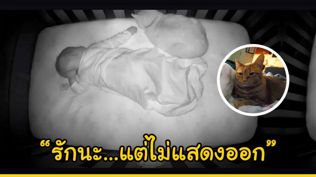 น้องแมวแสร้งทำเป็นไม่ชอบเด็กทารกตอนที่ได้เจอหน้ากันครั้งแรก แต่ความแตกเมื่อกล้องวงจรปิดจับภาพนี้ไว้เป็นหลักฐาน