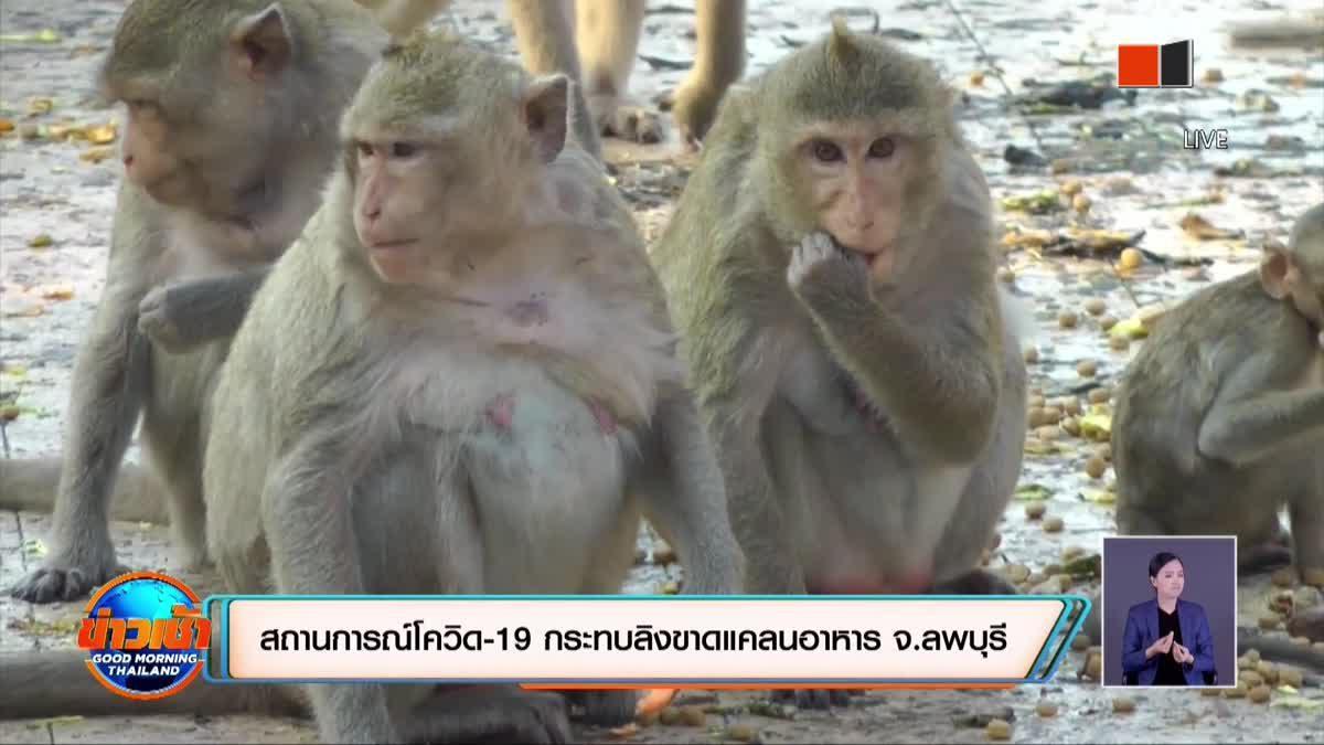 สถานการณ์โควิด-19 ส่งผลให้ลิงขาดแคลนอาหาร จ.ลพบุรี
