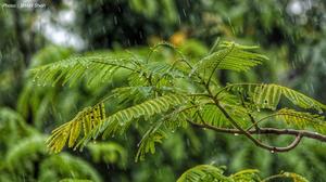 พยากรณ์อากาศ 3 ม.ค. 63 – ภาคเหนือตอนบน ระวังฝนฟ้าคะนอง/ลมกระโชกแรง