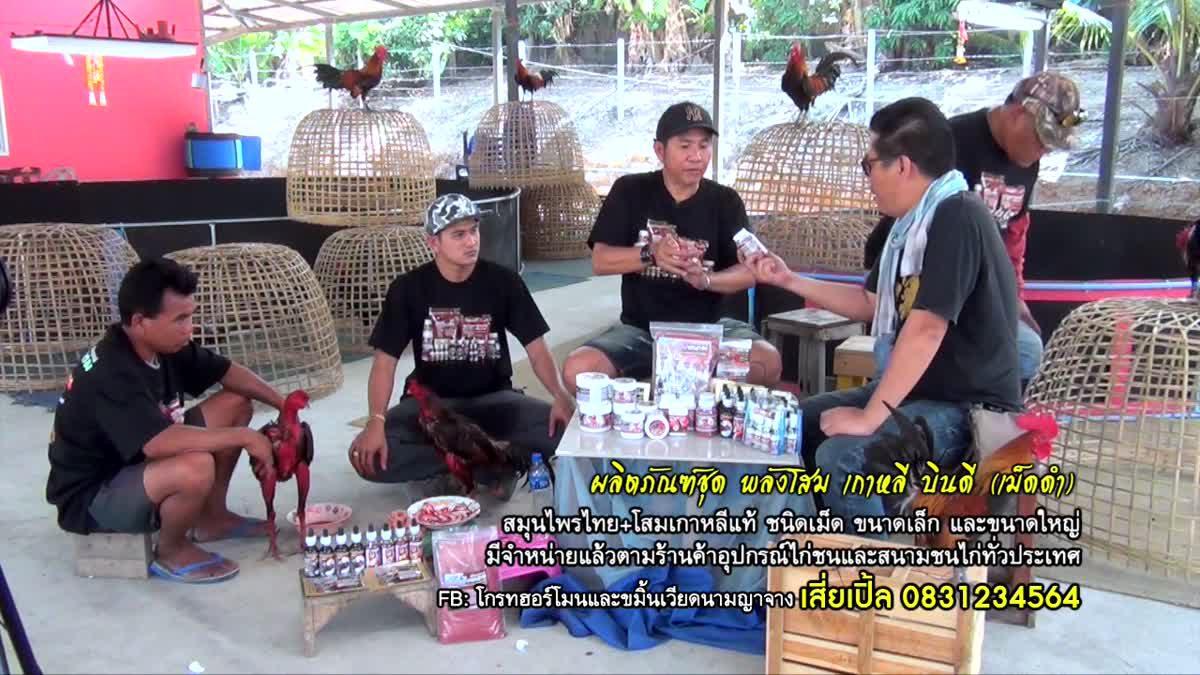 สินค้าสำหรับไก่ชนในเครือ เปิ้ลพม่าแพร่