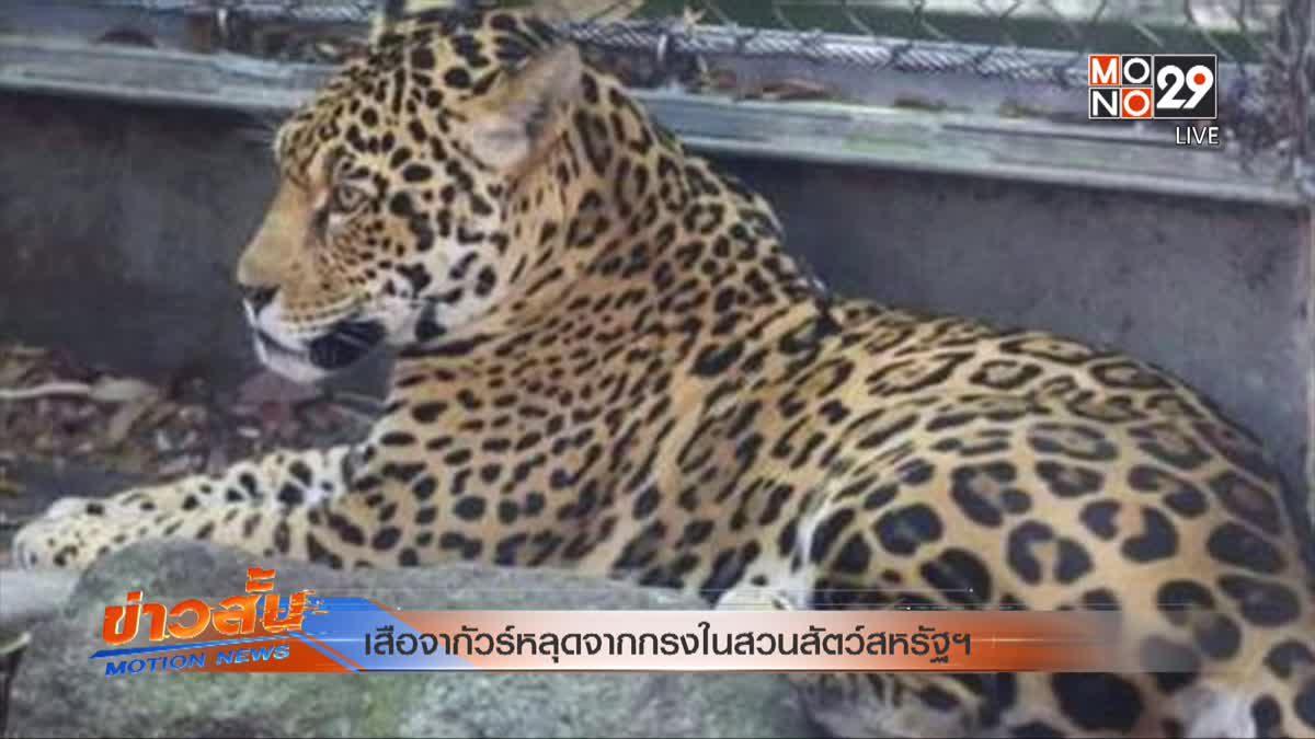 เสือจากัวร์หลุดจากกรงในสวนสัตว์สหรัฐฯ