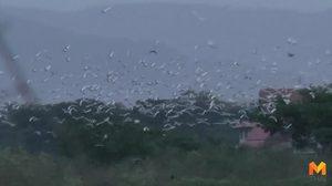 นกกระยางขาวกว่าหมื่นตัว อพยพอาศัยกว๊านพะเยาช่วงอากาศเปลี่ยน