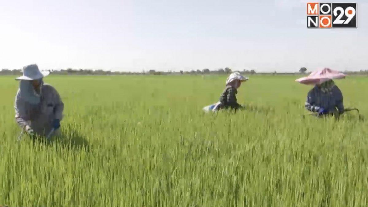 เร่งจ่ายเงินประกันราคาช่วยภาคเกษตร