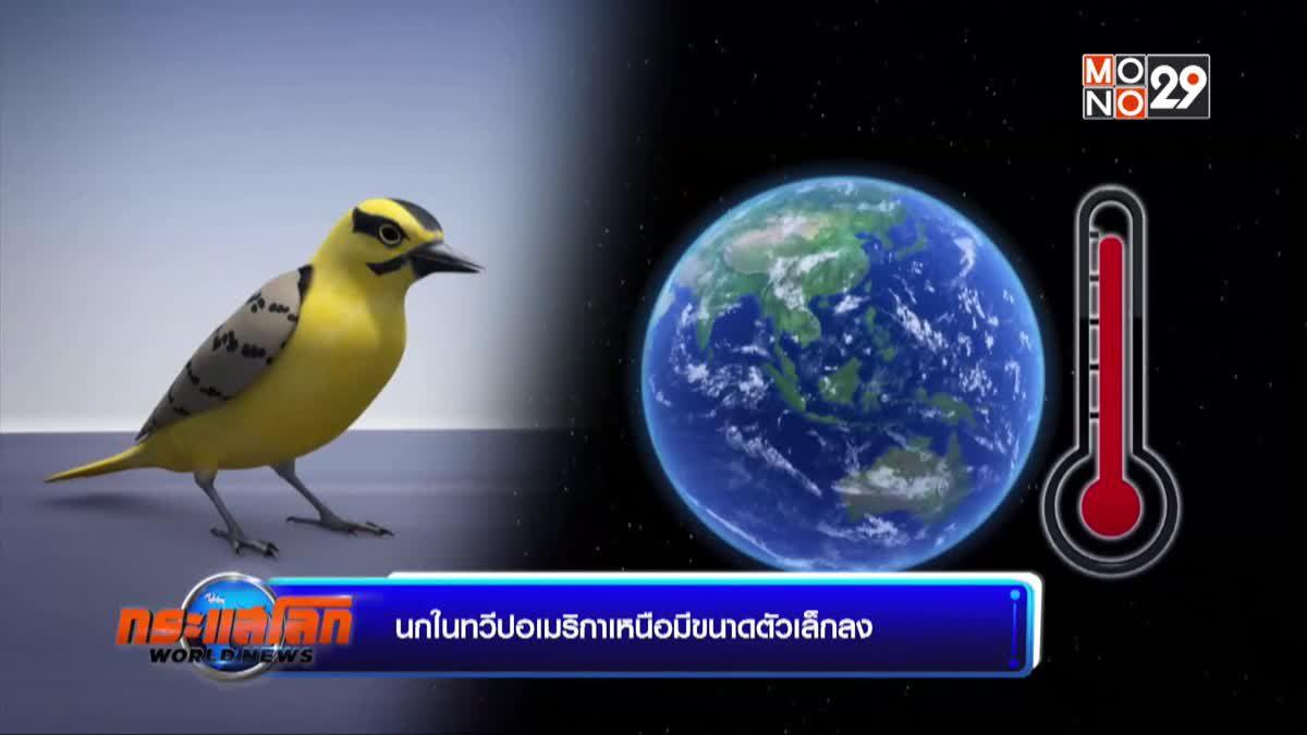 นกในทวีปอเมริกาเหนือมีขนาดตัวเล็กลง