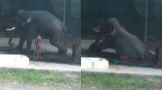 ควาญช้างดวงแตก ถูกช้างนอนทับตายคาที่ หลังพยายามฝึกให้มันเชื่อฟังคำสั่ง!!