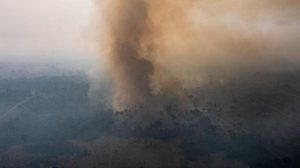 วิกฤตไฟป่าอะเมซอนกระทบสัตว์ป่าอย่างหนัก