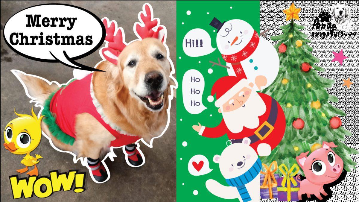 #Pandaกล่าว สุขสันต์วันคริสต์มาสนะจ๊ะ
