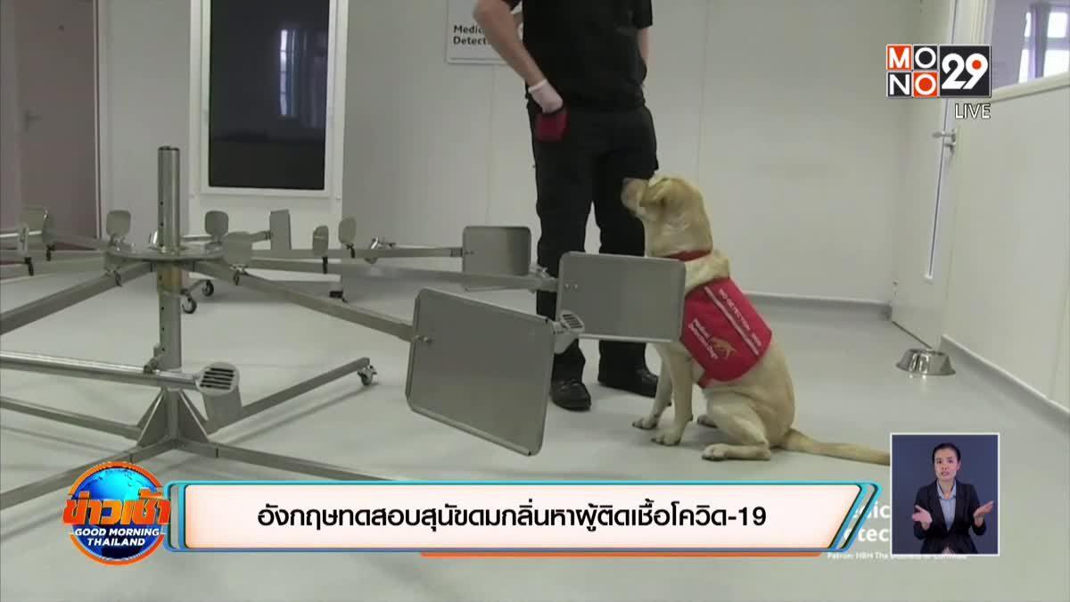 อังกฤษทดสอบสุนัขดมกลิ่นหาผู้ติดเชื้อโควิด-19