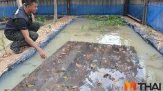 ตำรวจ EOD เมืองคอน ปลูกมะนาว-เลี้ยงกบขาย สร้างรายได้เสริม