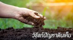 3 วิธีแก้ดินเค็ม ช่วยแก้ปัญหาดิน ให้ปลูกต้นไม้ ทำเกษตรได้ดีขึ้น