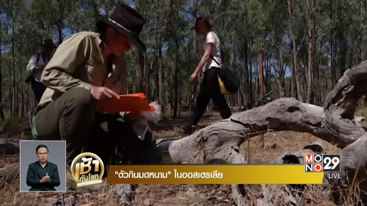 """""""ตัวกินมดหนาม"""" ในออสเตรเลีย"""