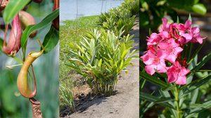 9 ต้นไม้ไล่แมลง กำจัดแมลงด้วยวิถีธรรมชาติปลอดภัยไร้สารเคมี