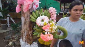 ต้นกล้วยประหลาดออกเครือกลางต้น ปลีกล้วยแทงกลับเข้าในต้น