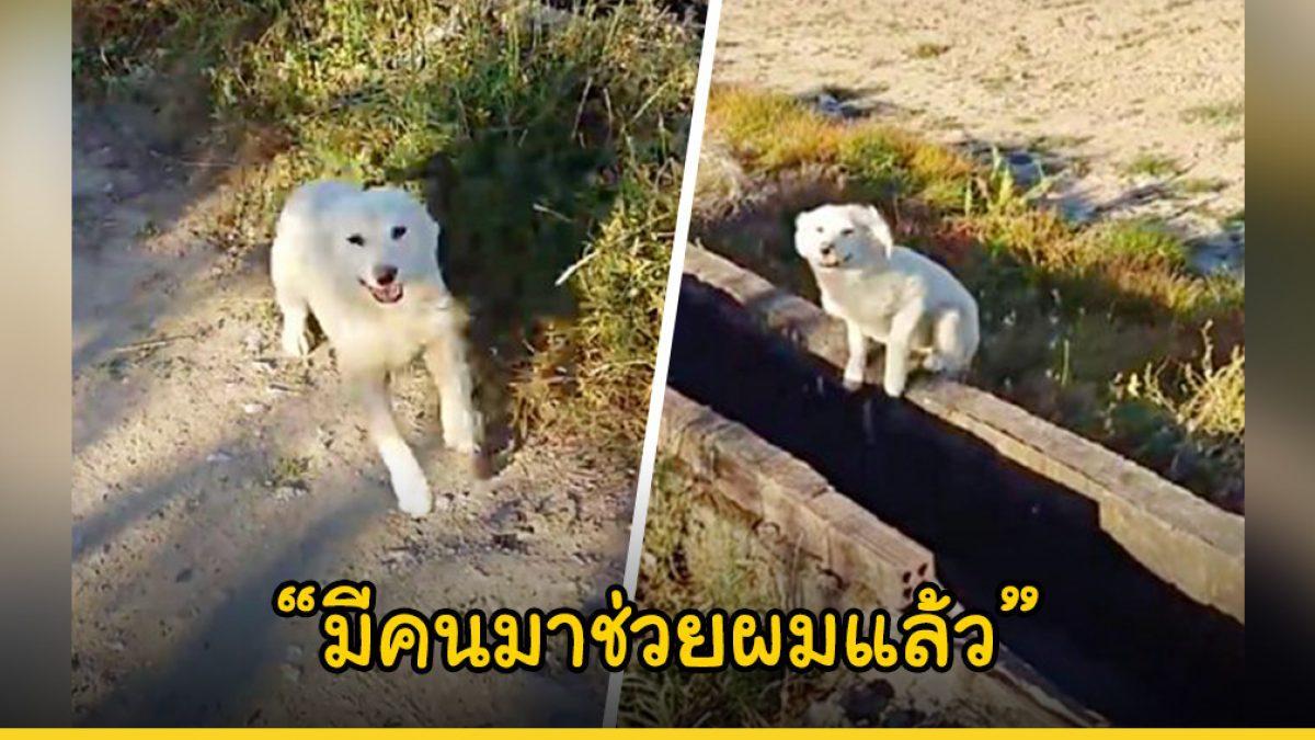 น้องหมาที่ถูกเจ้านายนำมาทิ้งที่รกร้าง กระโดดโลดเต้นดีใจเมื่อเห็นคนผ่านวิ่งผ่านหวังได้รับความช่วยเหลือ