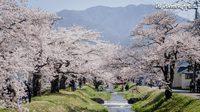[รีวิว] เที่ยวญี่ปุ่น ชมซากุระแบบฟินๆ ริมแม่น้ำคานโนะจิ เมืองฟูกูชิมะ