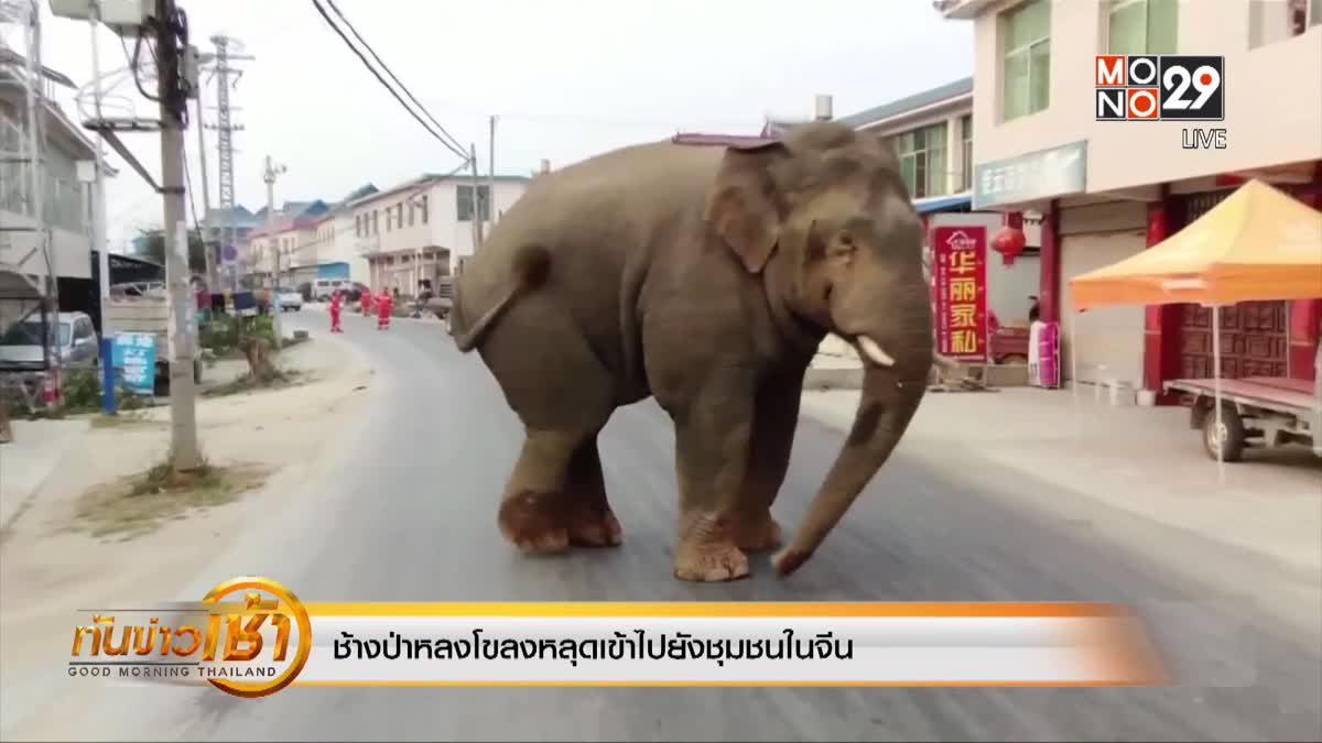 ช้างป่าหลงโขลงหลุดเข้าไปยังชุมชนในจีน