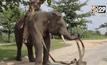 อินโดฯ ฝึกช้างช่วยดับไฟป่า