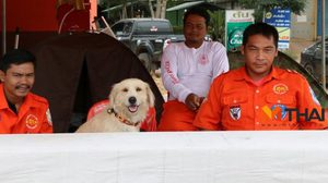 ตามหาเจ้าของ!! หมาพลัดหลงที่ อ.ด่านขุนทด คาดตกจากรถ – ไม่ยอมกินอาหาร