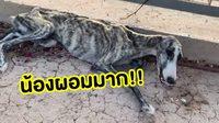 เปลี่ยนไปมาก! จากน้องหมาข้างถนน ผอมหนังหุ้มกระดูก หลังได้รับความช่วยเหลือ