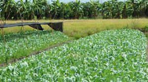 จากแปลงนาข้าว สู่ 'เกษตรพอเพียง' สร้างรายได้วันละ 1,000