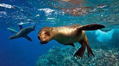 หมู่เกาะกาลาปากอส (Galapagos) ดินแดนของสัตว์หายาก หนึ่งเดียวในโลก!