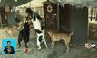 ศูนย์พักพิงสุนัขในเวสต์แบงก์