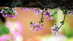 ภาพถ่ายงานละมุน ภาพดอกไม้สวยงาม สบายตา