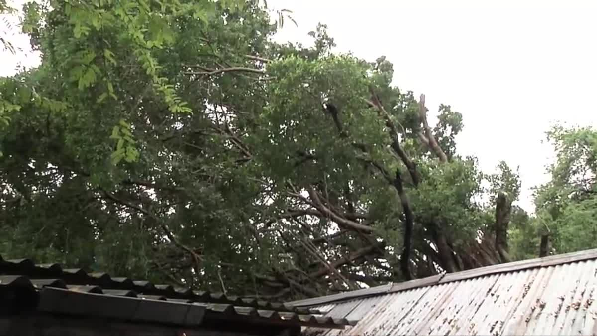 ฝนตกหนักต้นไทรอายุกว่า 60 ปี โค่นทับบ้านประชาชน