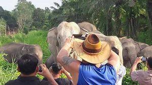 นักท่องเที่ยวแห่ชมโขลงช้างเขาอ่างฤาไน กว่า 70 ตัว แบบใกล้ชิด