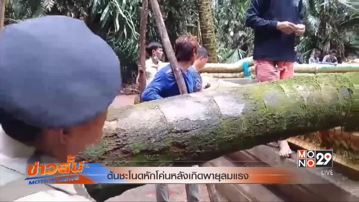 ต้นชะโนดหักโค่นหลังเกิดพายุลมแรง