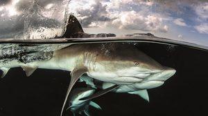 นัท สุมนเตมีย์ ช่างภาพใต้น้ำชั้นนำระดับสากล