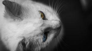 6 ความเชื่อเรื่องลี้ลับ ของสหรัฐอเมริกา การจาม แมวขาว ฯลฯ