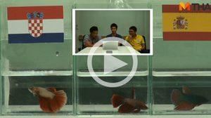 ซี้ซั้วฟันธง! ปลากัดทายผล ยูโร 2016 โครเอเชีย ปะทะ สเปน (21 มิ.ย.)