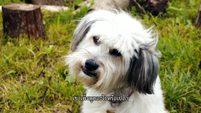 ซีรี่ส์เกาหลี Pudsey the Dog [ พัดซี่ ยอดสุนัขแสนรู้ ] Part 3