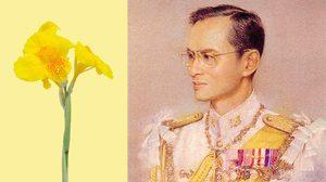 5 ธันวาคม วันพ่อแห่งชาติของประเทศไทย | สัญลักษณ์คือดอกพุทธรักษา
